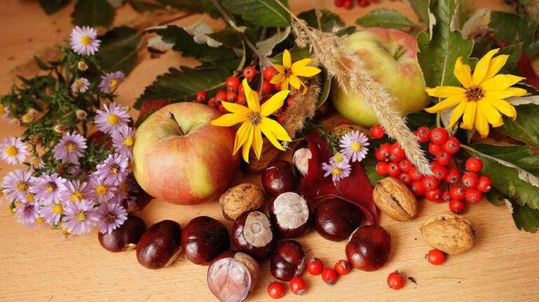 kolory jesieni, kasztany, jarzębina
