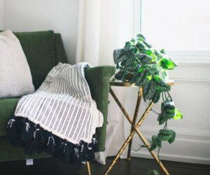 Bluszcz - ozdobdny w salonie