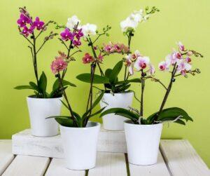 Ozdobne kwiaty storczyki